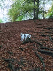 Taking Ruby out for a long walk on Leckhampton Hill, Cheltenham