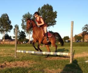 Jumping on an arabian horse