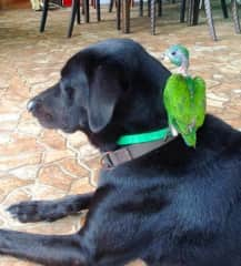Our dog, Baloo and a rescue parrot
