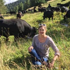 Me with Valais fighting cows