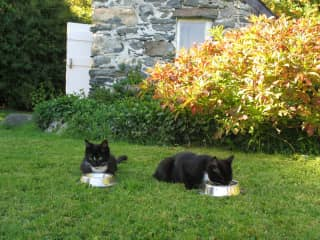 Taming Bruce and Sheila - breakfast 'al fresco' at home