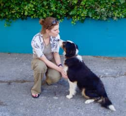 Scotty was a dear to bond with. Such a sweetheart and gentle pup.
