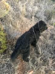 Tootsie, on a walk