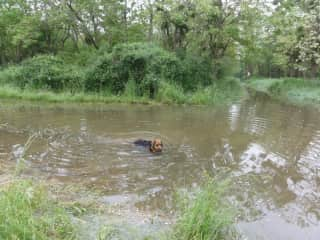The dog Calie swimming in the Loire