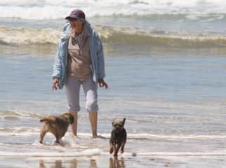My border terriers on the beach