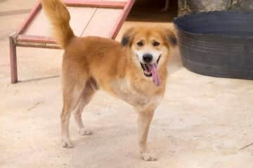 Opie our three legged rescue dog we rescued from Thailand to the US. Please check out his video by goggling Soi Dog Nathan.  Soi Dog is a rescue organization in Phuket Thailand.  We had him for three years until he passed in 2018.