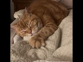 Pudha - loving his blanket!