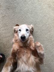 My always energetic 12 year old girl, Brandi