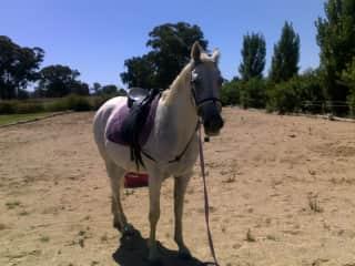 My horse Shazzy
