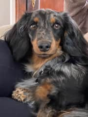 Hi!  My name is Beck. I am a very sweet boy. I love to walk around my neighborhood and I love to play in my yard. I will not be home for this sit but I do I look forward to future fun with a sitter.