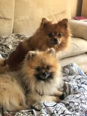 My Furbabies Boo Boo and Muffy Bear