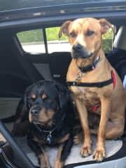 Jak & Eva love travelling in the car.