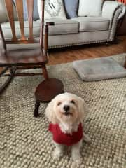 He loves sweaters!