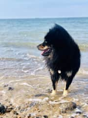Beach Bum Balthazar