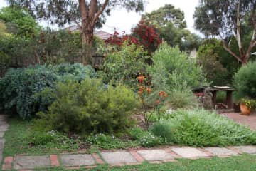 My garden featuring Australian Native Plants