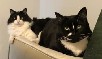 Stevie the Wonder Cat and Princess Dusty