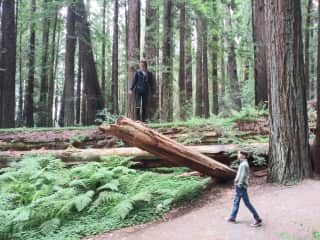 Sam and Laura exploring the Redwoods