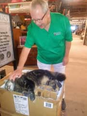 Even antique shopping, he makes friends with kitties!