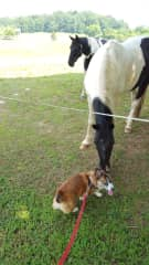 Rocky visiting the horses