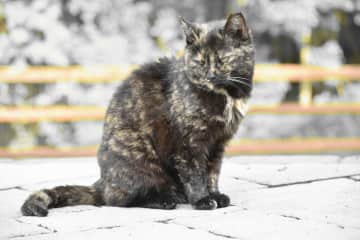 Halloween - Feral cat we took care of for 18 years.  She passed in 2020.