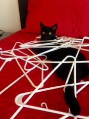 Jojo likes to help with laundry