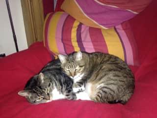Mini and Lola.