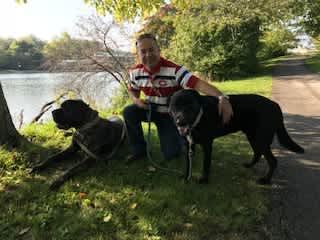 Dolly the English Mastiff and Peter the Labrador Buffalo, NY