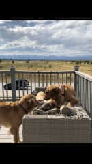 Maris with Charlie and Cooper on a sunny morning in Colorado, US.