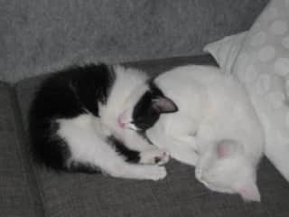 My two cats, Speedy and Sputnik.