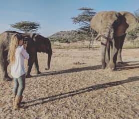 The two 'friendly' elephants that I had the pleasure of helping look after at the rescue centre.