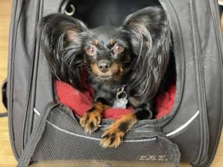 Tori ready to go on a car ride!