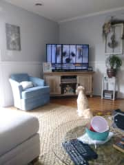 Benji loves watching the Dog TV channel!