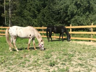 My horses Reba and Little Bit in their paddock.
