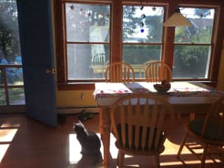 Sasha in the sunny kitchen. A peak at the harbor out the window.