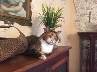 Patsy Overseeing Wallpaper Removal