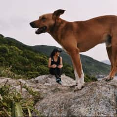 This was taken in Brazil and this dog followed my friends and I during a hike!