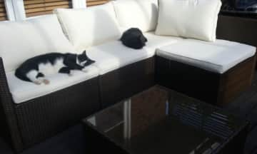 Our cats George and Charcoal relaxing