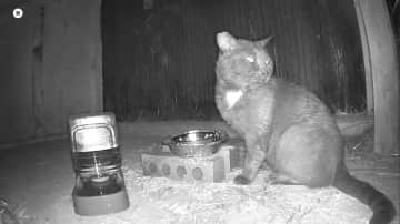 We have a rotating cast of nightly backyard visitors and put out food and water for them in two spots.  Bruce often eats at the back feeding station so it is not likely you will see him.