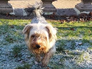 Cookie (Aberdeen) - Housesit #5