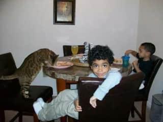 My grandchildren and my bengal cat