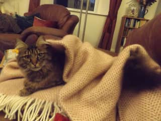 Tilly - A house sit.