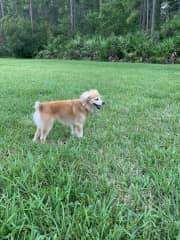 My dog Sami