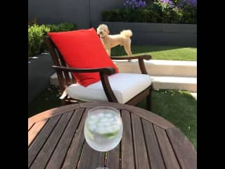 Back garden with Logan and a G&T