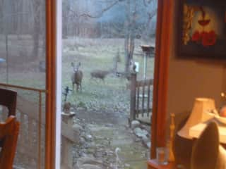 More wild animal friends spying on you!