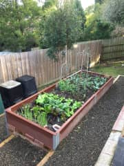 Our new raised veggie garden. We have tomatoes taller than me at the moment!!