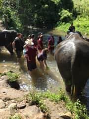 Me washing an elephant