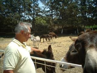 We love donkeys too. Nigel at Paphiakos.