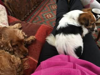 Afternoon nap time for Lily, Lucy and moi!
