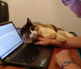 Dipsy helping with emails in Dampier, WA August 2017