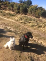 This is a photo of two of my Charges out walking in the Winnie the Pooh Forest at Crowborough, in February 2019